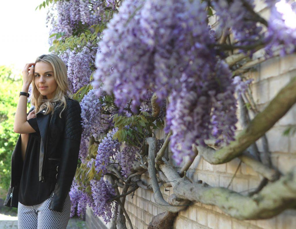 wisteria blogger