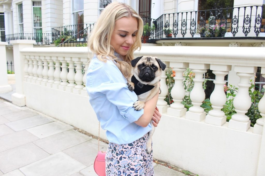 blogger and pug